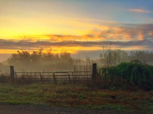 """Gateway to the Light"" A beautiful sunrise this morning with a touch of fog."